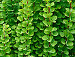 Thorn Background Of Green Branches And Leaves Of Barberry stock image