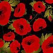 Background Illustration With Poppies Over Black