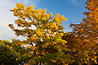 Autumn Background Image Of Three Trees And Blue Sky stock photo