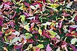 Background Of A Layer Of Beautiful Autumn Leaves stock photography