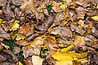 Background Of A Layer Of Beautiful Autumn Leaves stock photo