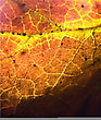 Background Macro Close Up Abstract Of A Yellow Red Black Brown Leaf And His Veins In The Light stock photo