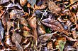 Background Of A Pile Of Dry Autumn Leaves In HDR High Dynamic Range stock image