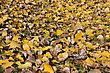 Background Of Yellow Autumn Leaves On The Ground stock photography