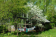 Canopy Backyard Of The Rural House In The Spring And A Blossoming Tree About A Shed stock image