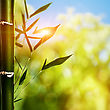 Bamboo Grass Against Abstract Natural Backgrounds stock photo