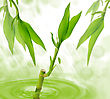 Bamboo In A Water stock image
