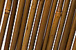 Bamboo Stems Background Close Up stock image