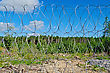 Barbed Wire Fence On A Background Of Blue Sky With White Clouds, Green Trees, Yellow Soil And Gravel