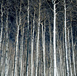 Bare Forest stock image