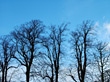 Bare Trees stock photography