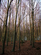 Landscapes Bare Trees stock photo