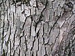 Bark Of Old Tree, Nature Background stock photo