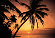 Beach Sunset With Palm Tree Silhouette stock photography