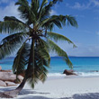 Beach with Palm Tree - Praslin, Seychelles stock photo