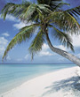 Beaches with Tropical Palm Trees