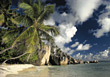 Beaches with Tropical Palm Trees, Maldives stock photography