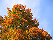 Beautiful Autumn Leaves Of Maple Tree On Sky Background stock photography