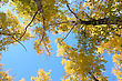 Beautiful Autumn Time, Yellow And Red Leaves On Trees. stock photography