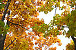 Beautiful Autumn Time, Yellow And Red Leaves On Trees. stock photo