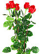 Beautiful Bouquet Of Red Roses Isolated On White Background