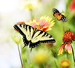 Beautiful Butterflies On The Flowers stock photography