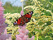 Beautiful Butterfly On Pink Flower stock photo
