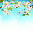 Beautiful Cherry Blossom, Branches Of Tree, Natural Glowing Background - Vector
