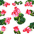 Beautiful Collage Of Pink Roses stock photography