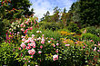 Beautiful Flower Garden In Summers Full Bloom stock photo