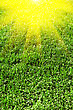 Beautiful Green Grass Texture stock image