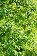 Beautiful Green Leaves Background. Selective Focus stock image