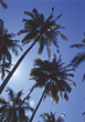 Beautiful Palm Trees stock photography