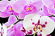 Beautiful Purple And White Orchids