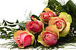 Beautiful Roses stock photography