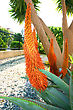 Beautiful Succulent Aloe Plant And Red Flowers stock photo