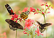 Beautiful Tropical Butterflies On A Red Flowers stock photography