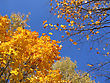 Beautiful Yellow Autumn Trees On Blue Sky Background stock image