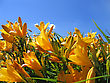 Beautiful Yellow Flowers On Blue Sky Background stock image