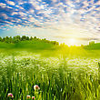 Beauty Evening On The Meadow, Abstract Summer Landscape stock image