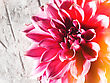 Beauty Lotus Flower Over Abstract Natural Backgroungs