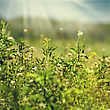 Beauty Meadow, Abstract Natural Backgrounds For Your Design stock image