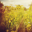 Beauty Meadow. Abstract Retro Style Natural Backgrounds