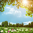 Beauty Meadow With Daisy Flowers, Abstract Natural Backgrounds