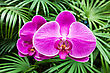 Beauty Orchid Growing In The Exotic Garden stock photography