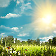 Beauty Summer Day On The Farm, Natural Backgrounds stock photo