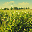 Beauty Summer Day On The Meadow, Natural Landscape stock photo