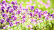 Beauty Wild Flowers On The Meadow, Panoramic Natural Backgrounds stock image
