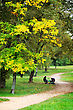 Beginning Of Autumn In The Park, The First Yellow Leaves And A Woman With A Stroller stock photography