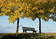 Bench Underneith Trees in the Fall stock image